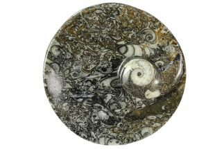 "Buy 4.2"" Round Fossil Goniatite Dish - Morocco - #108022"