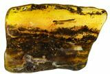 Detailed Fossil Termite (Isoptera) In Baltic Amber - #109464-3