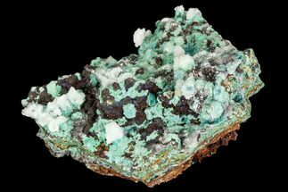 "1.9"" Rosasite, Aurichalcite and Calcite Crystal Association - Utah For Sale, #109808"
