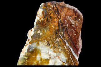 "4.6"" Petrified Wood (Araucioxylon) - Circle Cliffs, Utah For Sale, #110126"