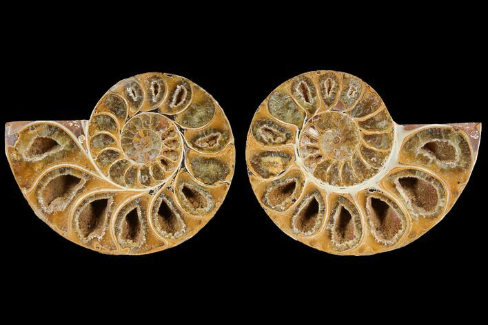 "2.7"" Cut & Polished, Agatized Ammonite Fossil (Pair)- Jurassic"