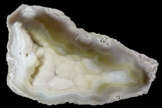 "3.1"" Agatized Fossil Coral Geode - Florida For Sale, #110164"