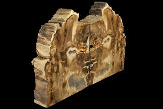 "Buy 8.8"" Tall, Petrified Wood Bookends - Oregon - #111106"