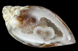 "1.6"" Chalcedony Replaced Gastropod With Druzy Quartz - India For Sale, #111174"