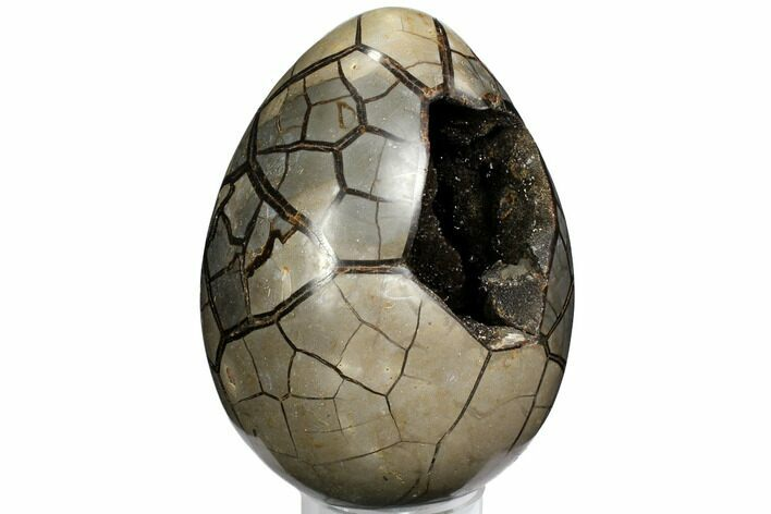 "10.5"" Septarian ""Dragon Egg"" Geode - Black Crystals"