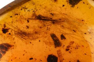 Buy 7.4mm Cretaceous Fossil Feather In Amber - Myanmar - #112630
