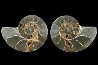 "Buy Bargain, 3.6"" Agatized Ammonite Fossil (Pair) - Madagascar - #111505"