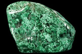 "11.5"" Flowery, Polished Malachite Specimen (49 lbs) - Massive!!! For Sale, #113042"