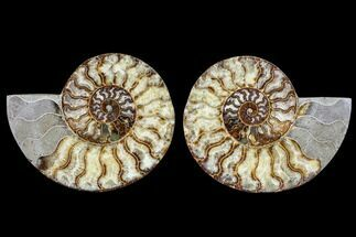 "Buy 7.2"" Agatized Ammonite Fossil (Pair) - Madagascar - #113065"