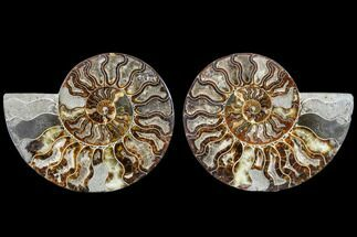 "Buy 7.6"" Agatized Ammonite Fossil (Pair) - Madagascar - #113062"