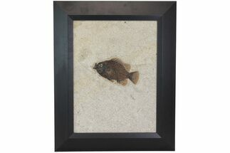 "4.8"" Framed Fossil Fish (Priscacara) - Green River Formation For Sale, #113276"