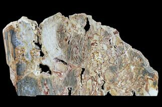 "11.5"" Polished Ibis Jasper Slab - Madagascar For Sale, #113747"
