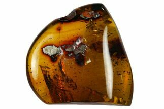 "Buy 1.1""  Polished Chiapas Amber (5 grams) - Mexico - #114976"