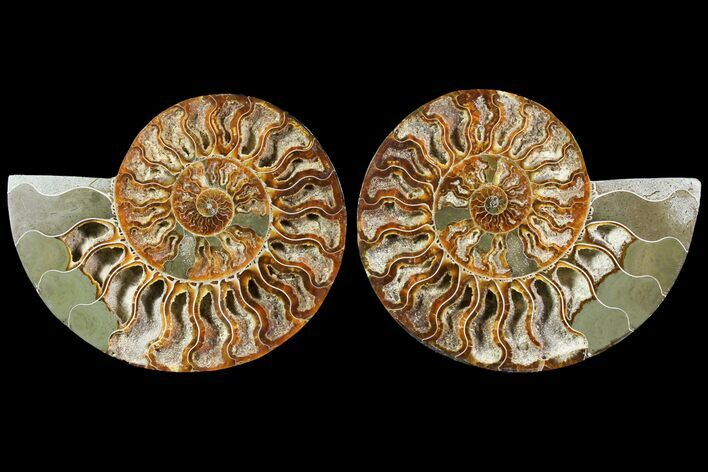 "5.6"" Sliced Ammonite Fossil (Pair) - Crystal Lined Chambers"