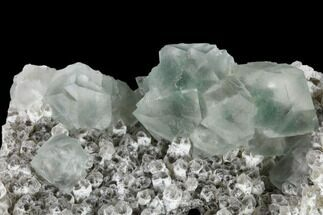 "Buy 2.9"" Green, Octahedral Fluorite Crystals on Quartz - China - #114019"