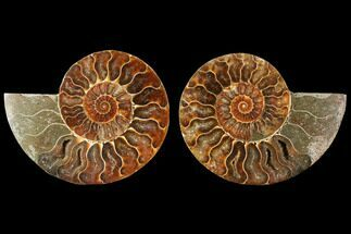 "4.05"" Agatized Ammonite Fossil (Pair) - Madagascar For Sale, #114854"