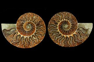 "Buy 4.5"" Sliced Ammonite Fossil (Pair) - Agatized - #114871"