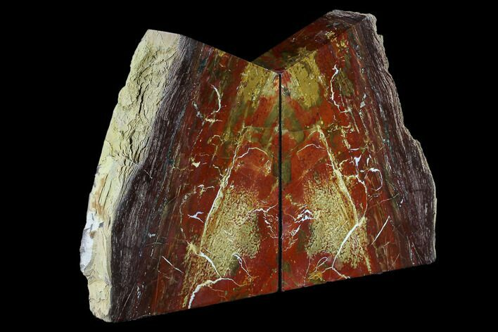 "8.0"" Arizona Petrified Wood Bookends - Red And Brown"
