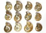 "Wholesale Lot: 3.1 - 4.4"" Polished Whole Ammonite Fossils - 23 Pieces - #116722-2"