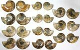 "Wholesale Lot: 4.1 to 5.8"" Cut/Polished Ammonite Fossil - 11 Pairs - #117037-2"