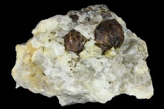 Garnet var. Pyrope & Quartzite - Fossils For Sale - #117573