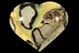 Septarian - Fossils For Sale - #117303
