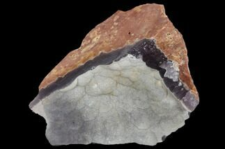 "2.5"" Botryoidal Grey-Purple Fluorite - Fremont County, Colorado For Sale, #118550"