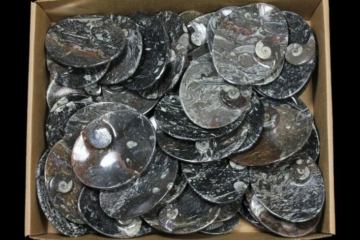 "Wholesale Lot: 5"" Oval Dishes With Goniatite Fossils - 49 Pieces"