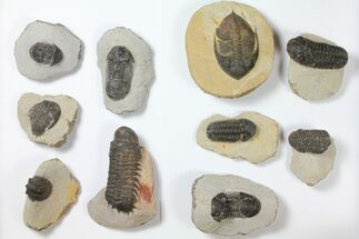 Various - Fossils For Sale - #119715