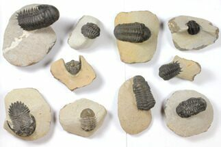 Various - Fossils For Sale - #119907