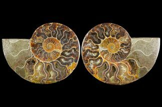 "Buy 4.5"" Sliced Ammonite Fossil (Pair) - Agatized - #114898"