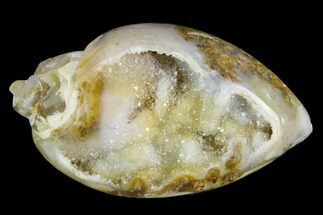 "1.55"" Chalcedony Replaced Gastropod With Druzy Quartz - India For Sale, #123330"