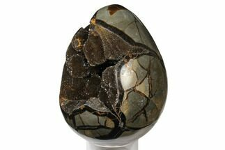 "Buy 7.6"" Septarian ""Dragon Egg"" Geode - Black Crystals - #124522"