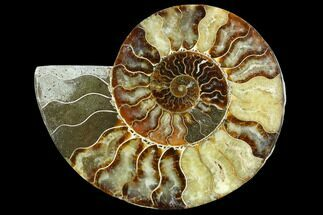 "Buy 7.45"" Cut Ammonite Fossil (Half) - Agatized - #125569"