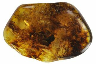 "1.6""  Polished Chiapas Amber (5 grams) - Mexico For Sale, #114812"