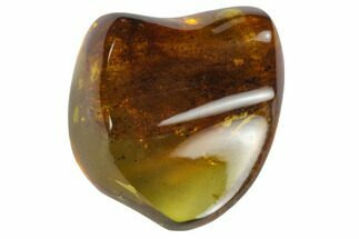 "Buy 1.1""  Polished Chiapas Amber (7 grams) - Mexico - #114835"