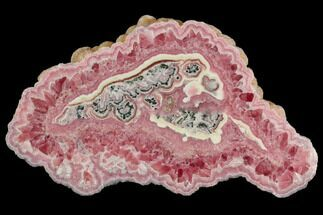 "Buy 4.4"" Rhodochrosite Stalactite Section - Argentina - #126370"