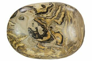 "2.6"" Polished Stromatolite (Greysonia) Pebble - Bolivia For Sale, #126350"