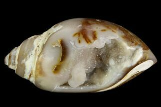 "1.78"" Chalcedony Replaced Gastropod With Druzy Quartz - India For Sale, #128255"