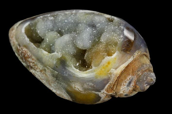 "1.85"" Chalcedony Replaced Gastropod With Druzy Quartz - India"