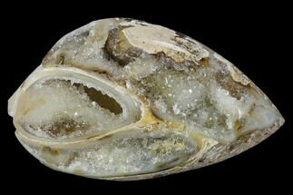 "1.6"" Chalcedony Replaced Gastropod With Druzy Quartz - India For Sale, #128252"