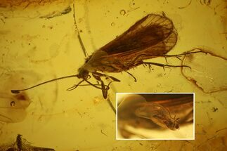 Detailed Fossil Caddisfly, Springtail and Fly in Baltic Amber For Sale, #128324