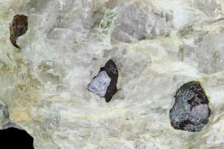 Garnet var. Pyrope & Quartzite - Fossils For Sale - #128388