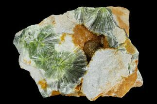 Wavellite - Fossils For Sale - #127098