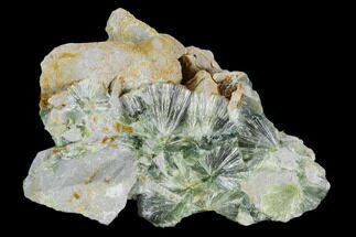 Wavellite - Fossils For Sale - #127113