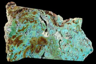 "Buy 6.6"" Petrified ""Colla Wood"" With Chrysocolla & Malachite - Turkey - #129070"