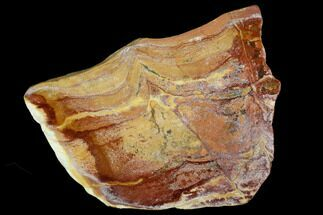 "Buy 4.6"" Polished Noondine Chert (Stromatolite) Slab - 1.4 Billion Years - #129184"