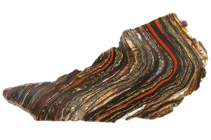 "11.3"" Polished Tiger Iron Stromatolite - 3.02 Billion Years"