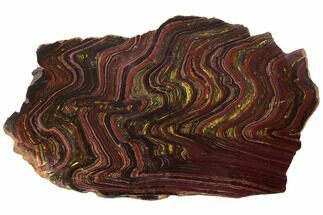 "8.7"" Polished Tiger Iron Stromatolite - 3.02 Billion Years For Sale, #129314"