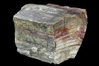 "5.3"" Triassic Petrified Wood (Araucaria) Section - Circle Cliffs, Utah For Sale, #129536"